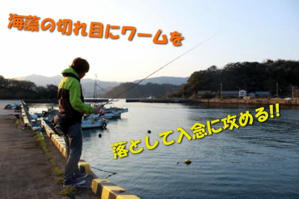 IMG_5582x.jpg