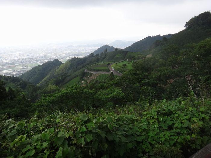 高草山ハイキングコース10
