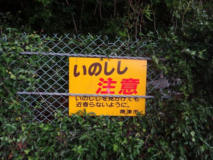 高草山ハイキングコース11