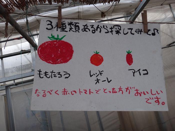 ももちゃん農園3