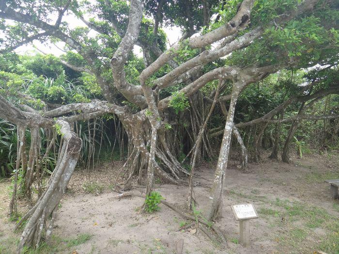 小浜島ビーチ3