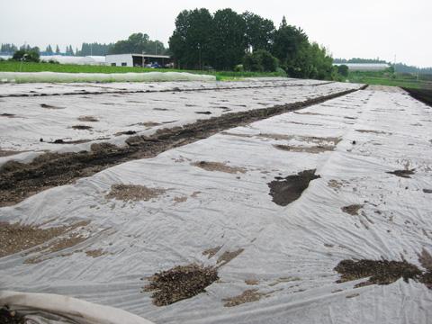 高原生活/土壌消毒