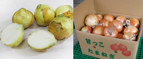高原生活/玉ねぎ商品