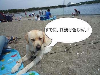 5月9日海の公園Dan君。