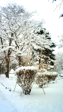 師走の雪景色