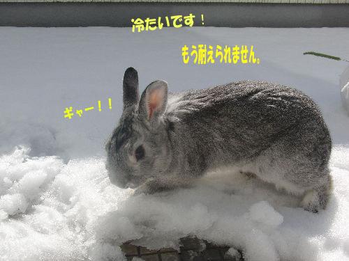 冷たいのは嫌い!