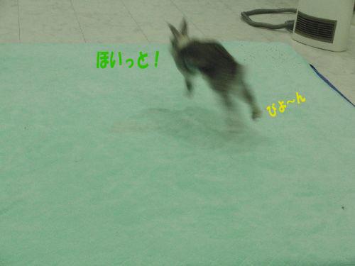 CIMG01391.jpg