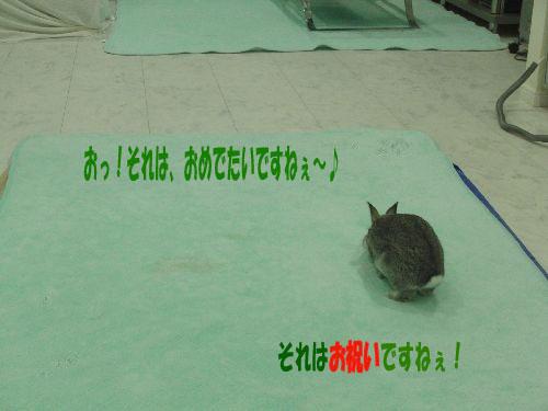 CIMG01570.jpg