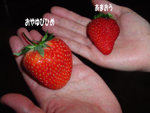 CIMG034601.jpg