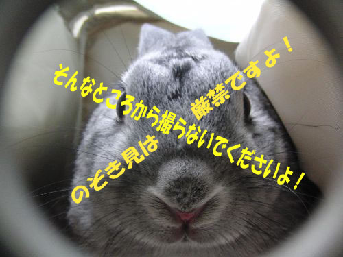 CIMG084004.jpg