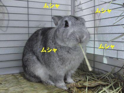 CIMG348300.jpg