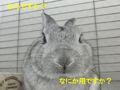 CIMG3670111.jpg