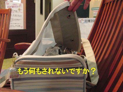 CIMG38060.jpg