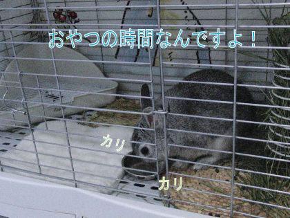 CIMG5178001.jpg