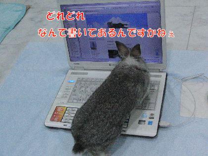 CIMG522606.jpg