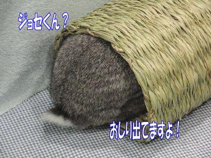 CIMG56903.jpg