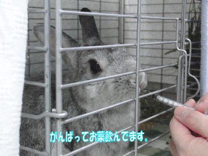 CIMG681811.jpg