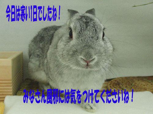 CIMG691411.jpg