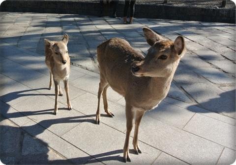 0107鹿の親子