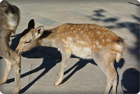 0107小鹿