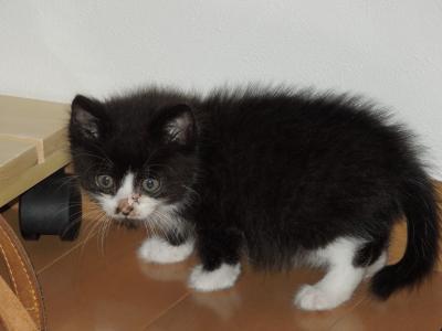 恵子ちゃんの猫2