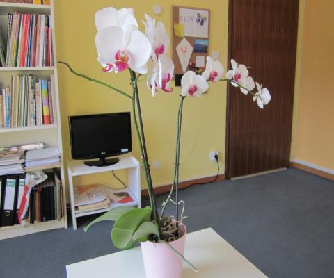 Orchidee heute