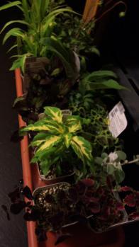 植物 待機中