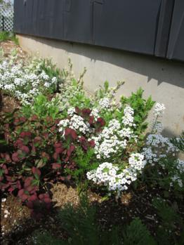 西側 花壇 開花