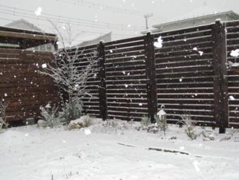 積雪(表)