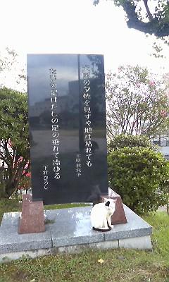 西坂公園のにゃんこ