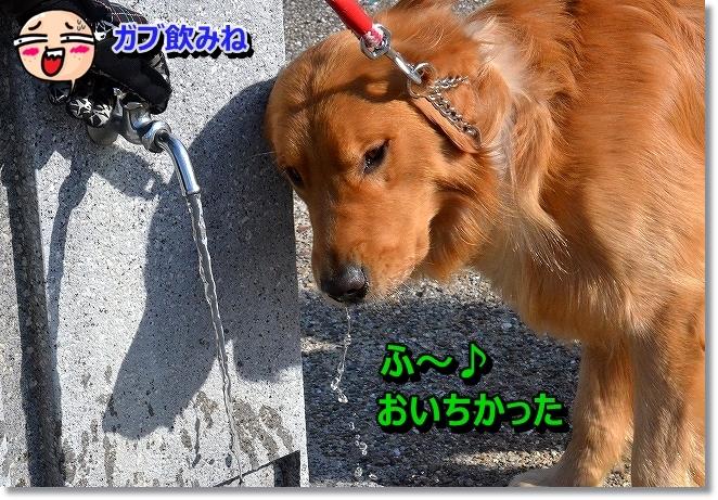 DSC_4846.jpg