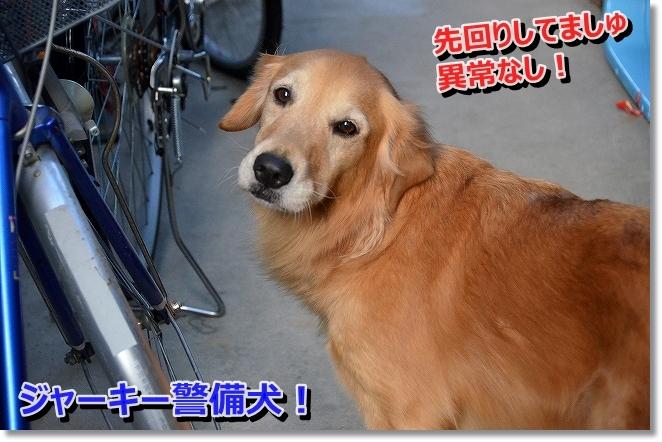 DSC_4852_20140123111932be0.jpg