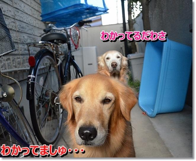 DSC_4858_201401231119561f9.jpg