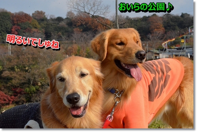 DSC_5517_201401051131376d8.jpg