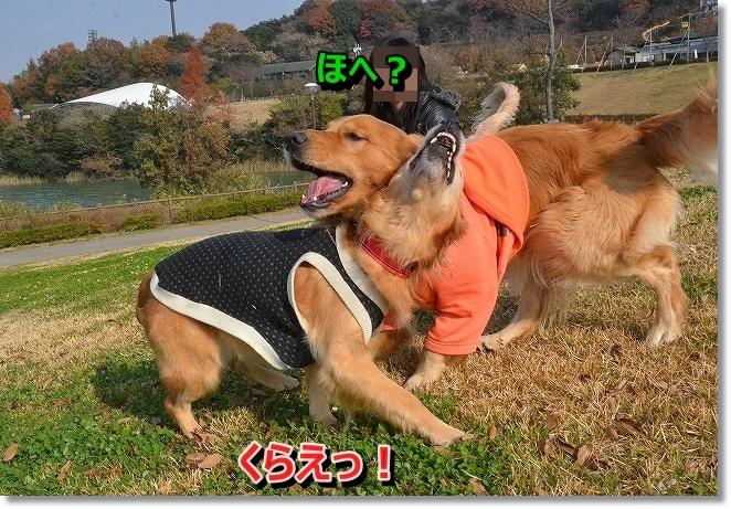 DSC_5559_20140105113233d5f.jpg