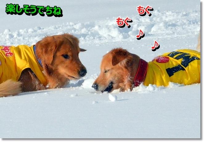 DSC_6049_20131230121437786.jpg