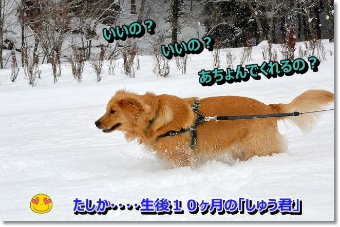 DSC_6884_20140110100202487.jpg