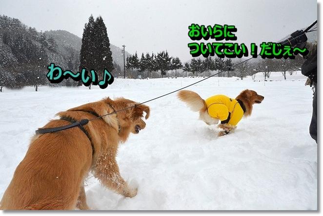DSC_6904_20140110100209dd8.jpg