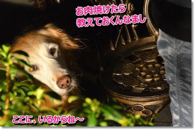 DSC_7217_2014011212452381f.jpg