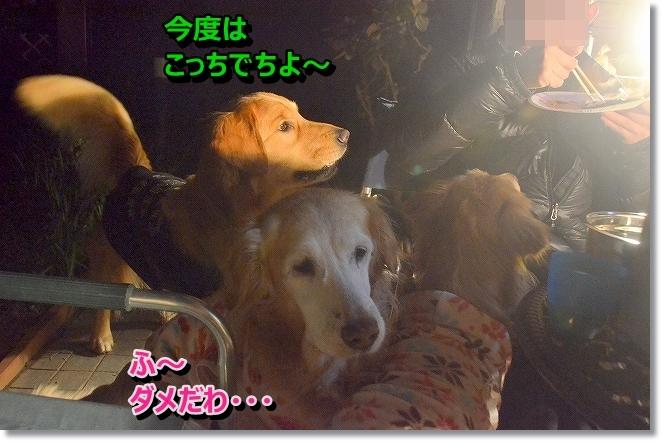 DSC_7258_20140112124615bf1.jpg