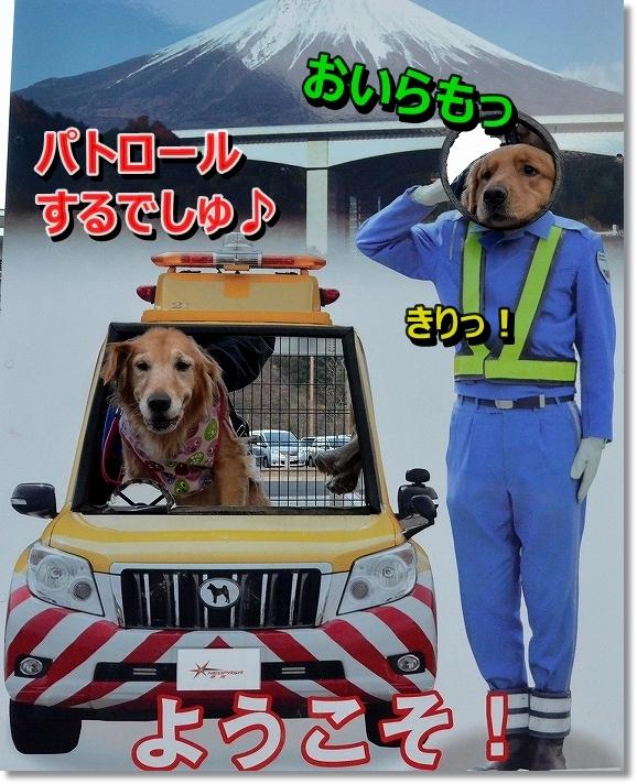 DSC_7352.jpg