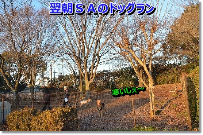 DSC_7388.jpg