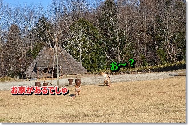 DSC_7404_201401150914199ea.jpg