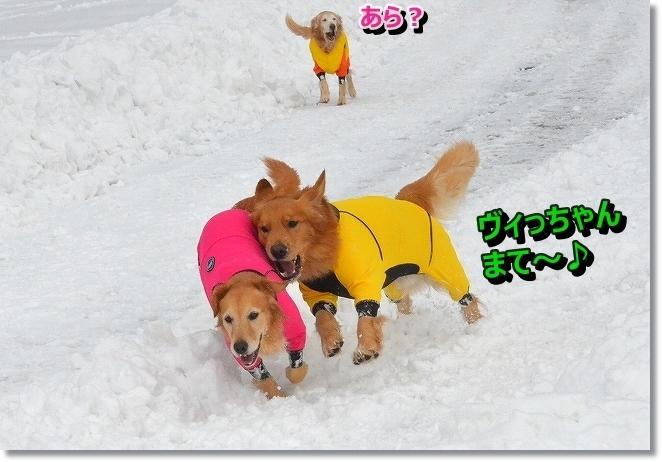 DSC_7547_20140118103759332.jpg