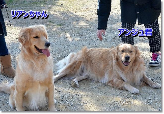DSC_7970_201401070811329ff.jpg