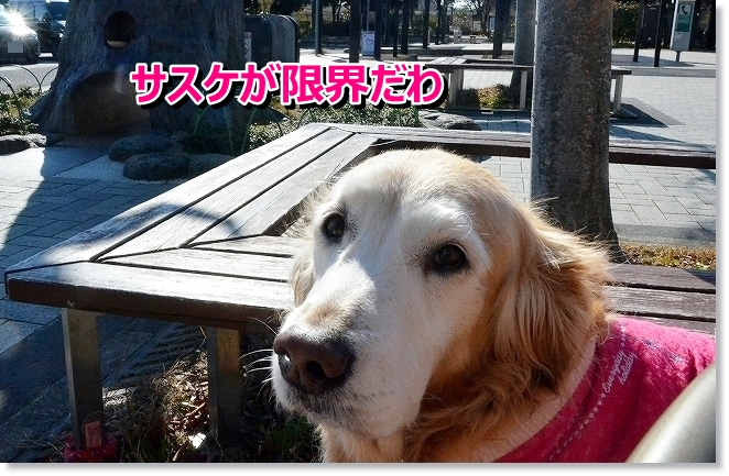 DSC_8347_20140131102804cf2.jpg