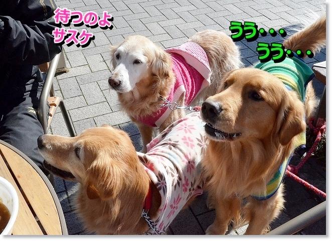 DSC_8355.jpg