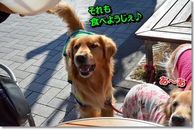 DSC_8368_20140131102953ac7.jpg
