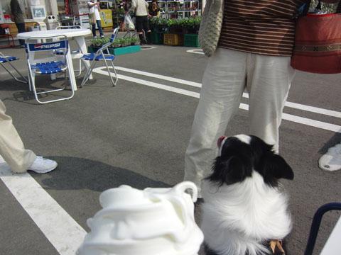 あさつゆ広場