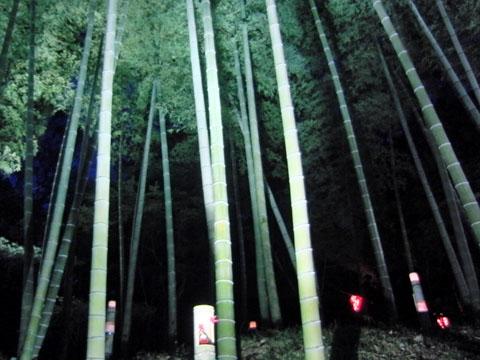 竹が光ってる